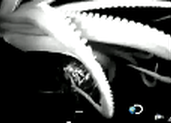Watching: Giant squid attacks boat in Kim's Picks @ TVKim