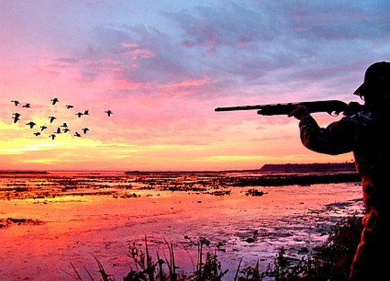 Florida Duck Hunting-Florida Sportsman