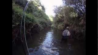 Monster Brown Trout Hunting in New Zealand