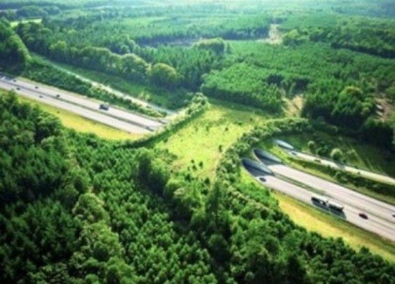 Wildlife crossing in Netherlands