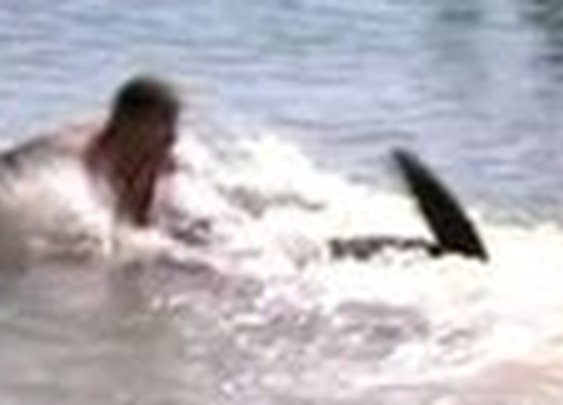BBC News - Swimmer filmed wrestling with shark off Australia coast