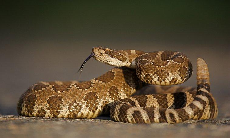 Snakebite Survival | Doom and Bloom (TM)