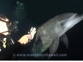 Wow - Dolphin seeks out help from diver
