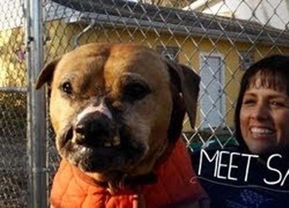 Meet Sam, Rescued From Dogfighting - YouTube