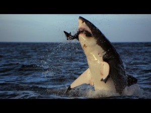Video: Colossus in Sector 4 | Air Jaws Apocalypse – Shark Week