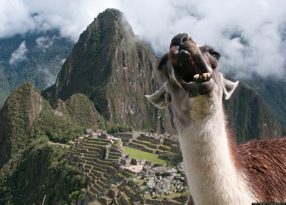 Machu Picchu Llama Photobomb by a blogger has gone viral!