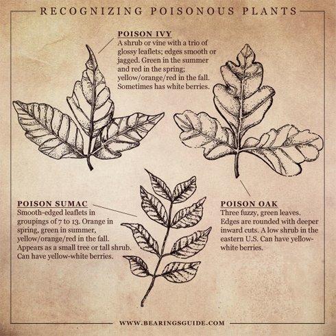 Recognizing Poisonous Plants- Bearings
