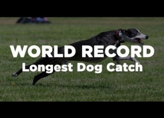 134 Yard World Record Longest Dog Catch