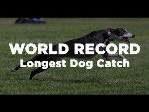 134 Yard World Record Longest Dog Catch