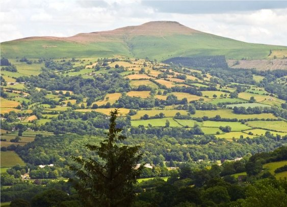 Sugarloaf Mountain, Abergavenny, S Wales. - Wildlife Photography