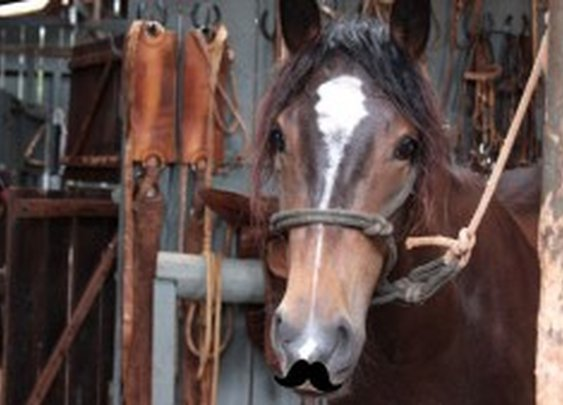 Have you been Eating Horse all this time? (Short answer: yes)  Find out with our Handy Quiz!