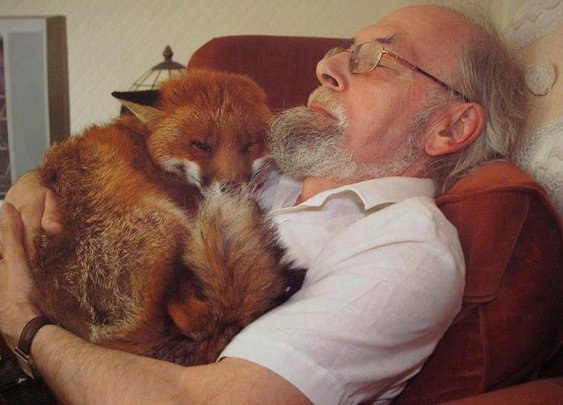 A very compassionate man and a loving beautiful fox>> Great story!