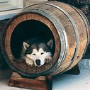 Wine Barrel Doghouse