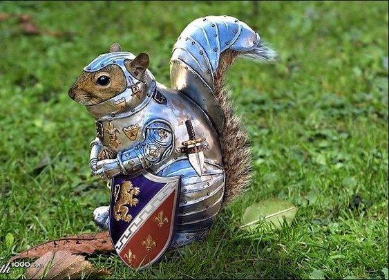 squirrel knight armor