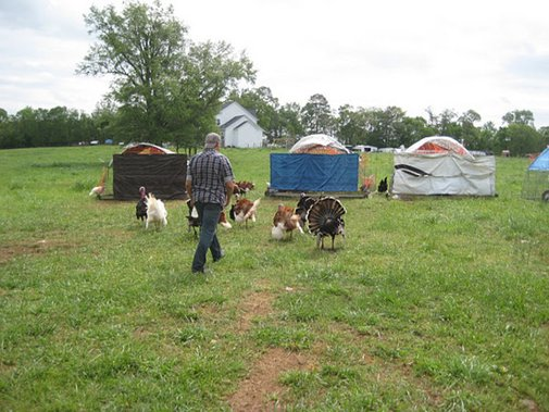 Keeping a Heritage Turkey Flock - Farm Dreams