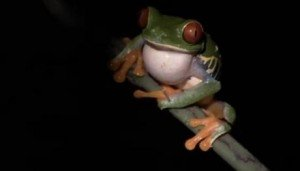 Frog Mastermind – Funny Talking Animals – Witty British Humor