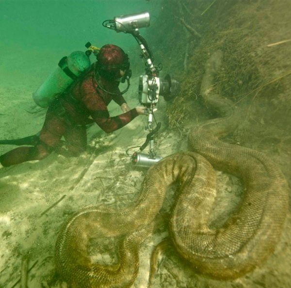Giant Anaconda Filmed Underwater
