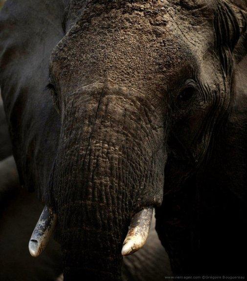 Wildlife Photography by Gregoire Bouguereau