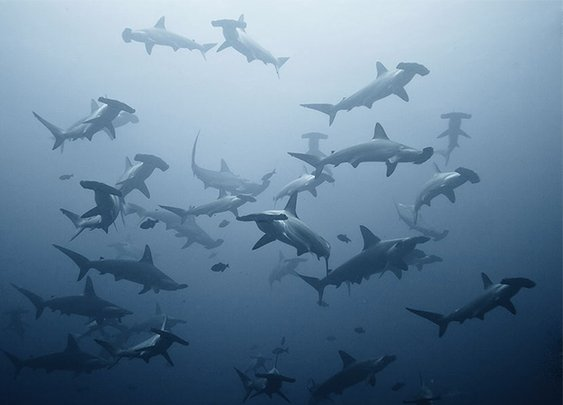 CRAZY pics of Sharks. Sharks. Sharks.