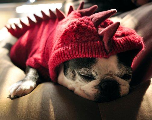 Dragon Hoodie Dog Costume