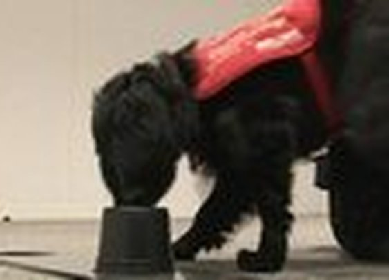 BBC -Dogs train animals to 'sniff out' breast cancer