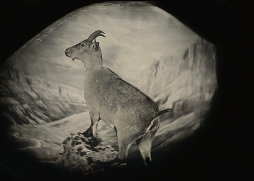 Should we bring extinct species back to life?