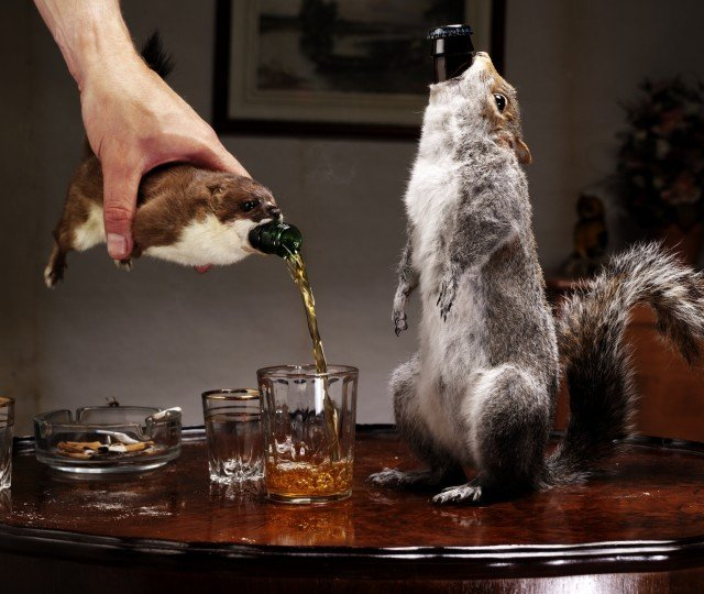 The strongest beer ever made, served inside a squirrel