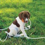 How to Pick the Right Puppy - Gun Dog Magazine