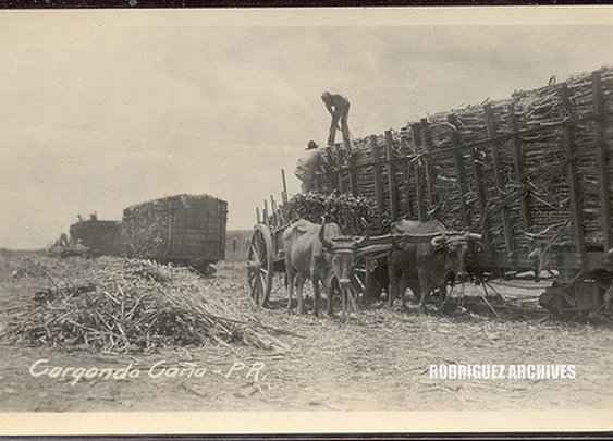 sugar mill workers loading the truck with sugar cane