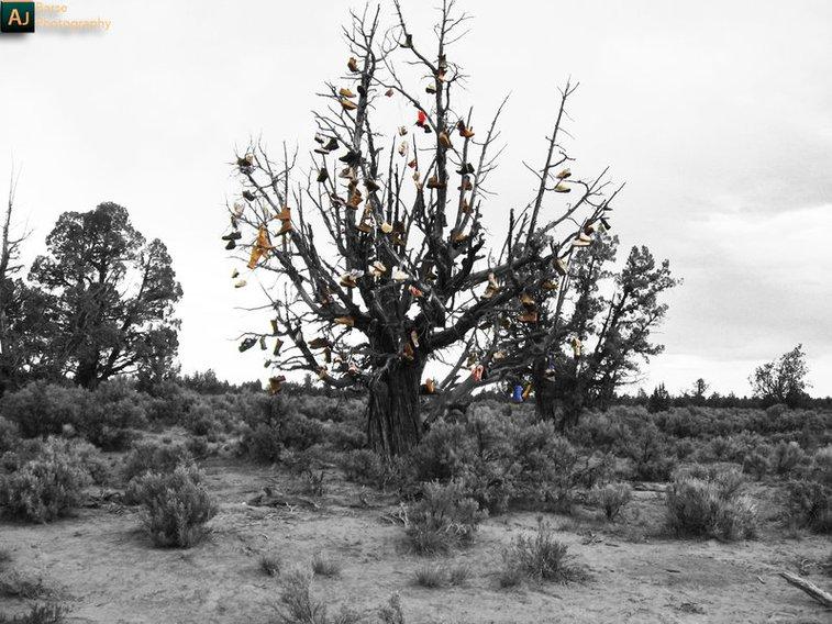 Tree of Timeless Kicks