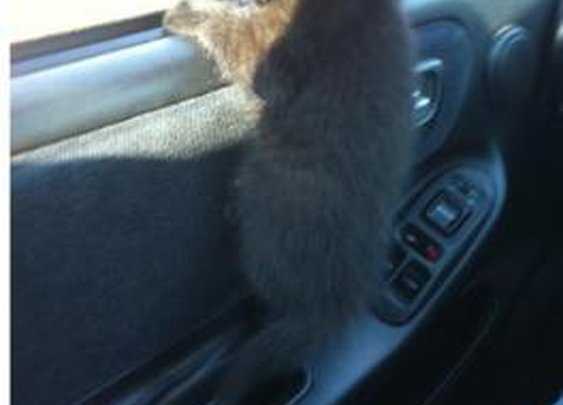 Best co-driver