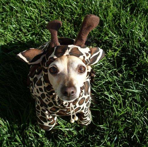 Giraffe Dog Pet Costume