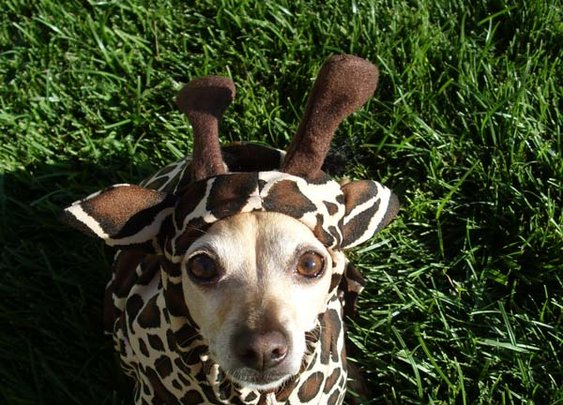 Giraffe Dog Pet Costume