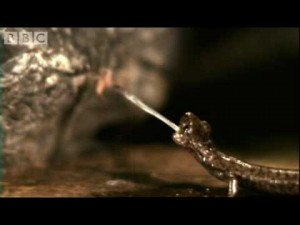 Animals in Slow Motion: Fastest Tongue and Fastest Punch – BBC | ClickExist