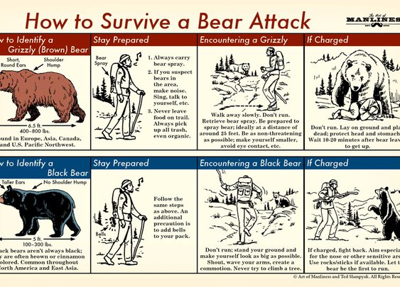 How to Survive a Bear Attack: An Illustrated Guide | The Art of Manliness