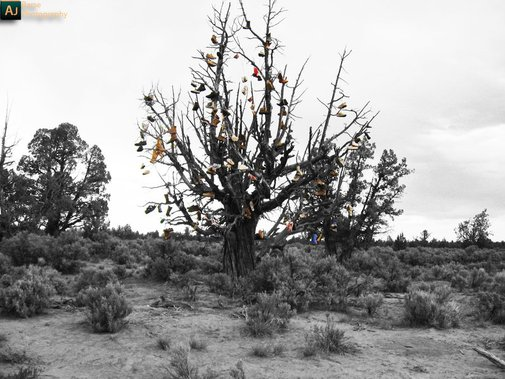 Tree, in the middle of nowhere, full of kicks