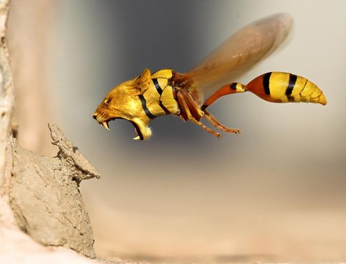 Lion wasp