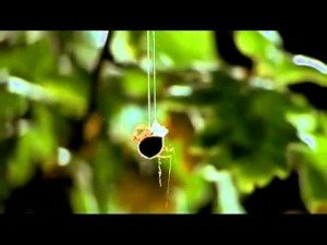 Spider's Web – Life in the Undergrowth – David Attenborough | ClickExist
