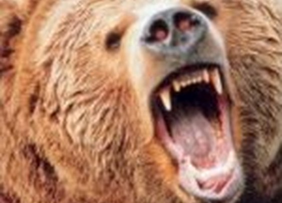 Bear Attack Survival Guide | The Art of Manliness