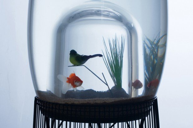 Duplex Aquarium and Cage by Constance Guisset