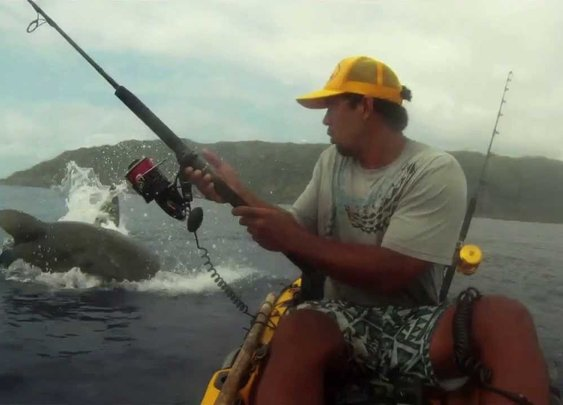 Shark Surprises Kayak Fisherman