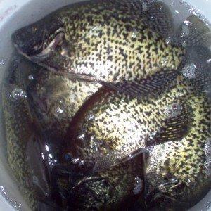 Redneck Fishing 101 - Flat Dark Earth