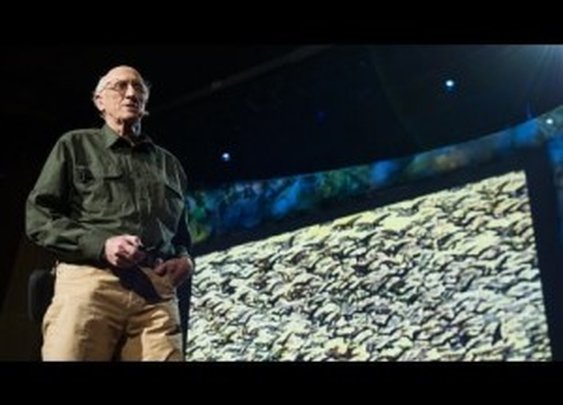 Stewart Brand: The Dawn of De-Extinction [TED Talk] | ClickExist