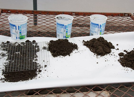 Quickly Test If Your Soil Is Acidic or Alkaline with Vinegar and Baking Soda