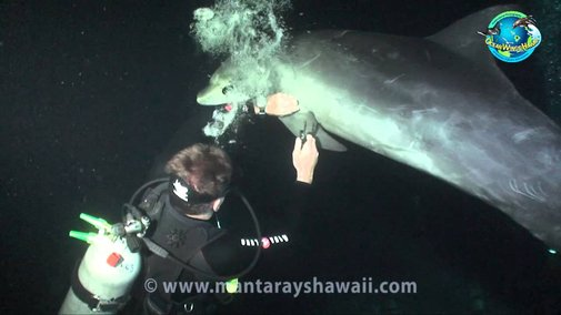 Dolphin entangled with fishing line rescued by divers