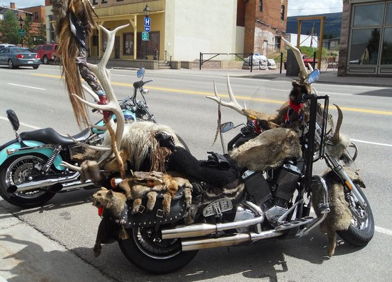 Motorcycle covered in pelts possibly the coolest bike I've ever seen.