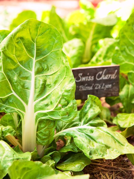 Eat What You Sow: How to Start a Vegetable Garden - Popular Mechanics