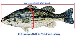 Estimating Bass Weights Using Length & Girth