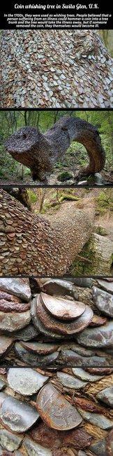 Coin wishing tree in Swila Glen, UK