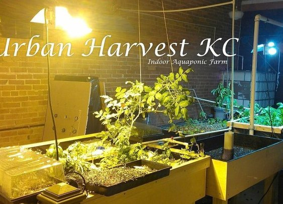 Urban Harvest KC - Indoor Aquaponic Sustainability Project by Maurice Person — Kickstarter